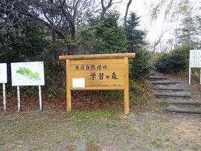 雨の自然環境学習の森 さすがに散歩の方もいません