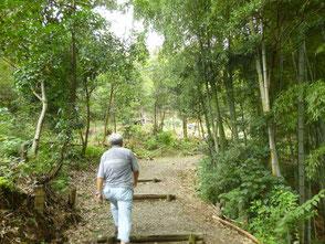 陽が入り明るくなった森を散策する木村会長
