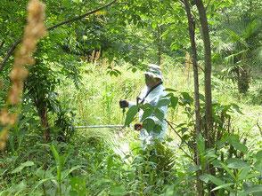 里山の草刈り作業