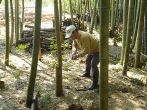 竹を伐る山田さん