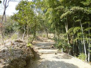 竹の除伐が進み明るい日差しが差込む里山散策路