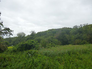 雲に覆われた今日の里山風景