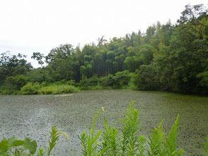 自然環境学習の森の中にある新池