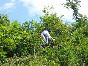 山の斜面で草刈機を使う山田さん
