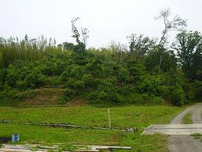 竹灯篭の会が担当する広葉樹林に遷移させる区域