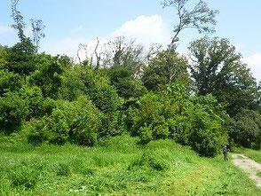 竹灯篭の会が手入れを担当する里山風景