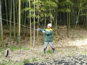 ロープで倒れる方向を誘導する大木さん(竹灯篭の会)
