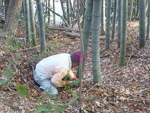のこぎりを使って竹を伐る竹炭の会の坂本さん