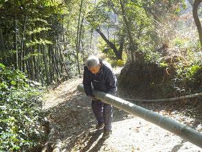 重量のある竹を引っ張り上げるのに苦労します
