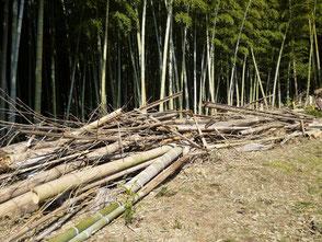運び出した竹の山
