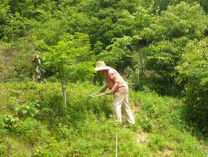 里山の雑木刈りをする木村会長