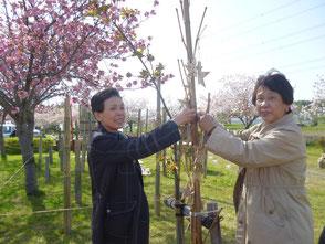 星に願いを!竹に願いを掛ける見学者の方です