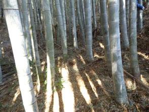 何年も放置された竹が無くなり綺麗になりました!
