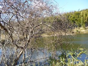 新池の風景は心が和みます!