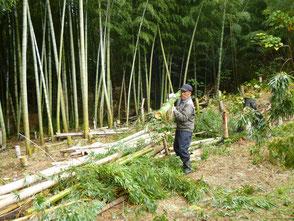 竹を運ぶ坂口さんです!