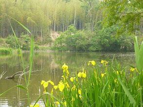 自然環境学習の森の中にある新池の風景