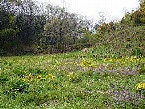4月 里山はすっかり春の景色です!