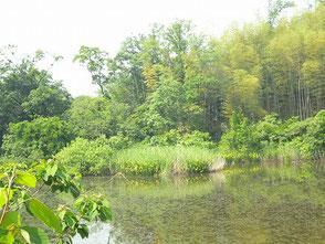 学習の森にある新池