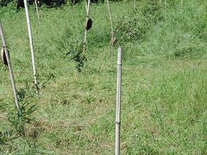 草が伸び過ぎて刈り取るのに大変な労力です