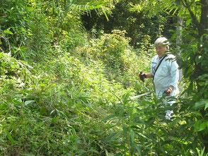 里山の下草刈りをする木村会長