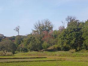 里山の紅葉風景