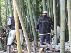 適度な間隔で竹を伐って陽が差し込むようにします!