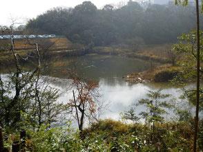 雨上がりの新池に水鳥が多く泳いでいます!