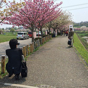 坊主橋付近の彫竹灯篭の取材風景