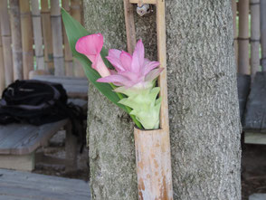 岡田さんが飾ってくれました。カラーとウコンの花