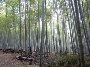 竹林の風景