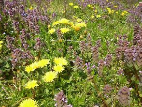 里山の草花