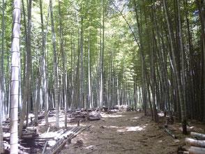 保全育成の会で竹林の整備が進められています!