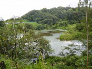 明るく視界が開けて新池が見渡せます!