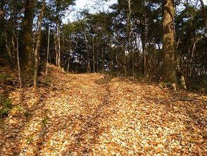 落葉のじゅうたんです 踏みしめる音が心地良い