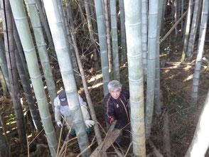 倒れた竹が多く悪戦苦闘です!