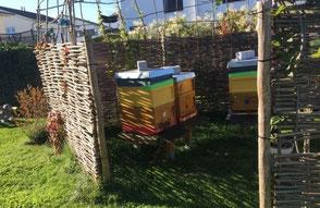 Wir bieten den Imkerservice auch für Privatleute im eigenen Garten. Flugloch beobachten, dem Summen lauschen und dann auch den eigenen Honig ernten und mit Nachbarn und Familie teilen oder zu Weihnachten verschenken.