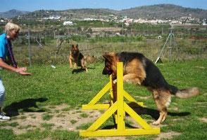 Sprung/Salto/jump