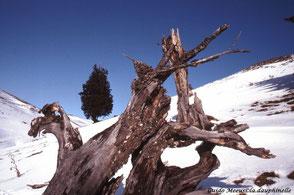 pins à crochet accrochés à la montagne