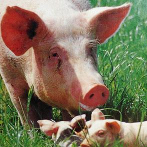 Tiere Tierhaltung Aufzucht