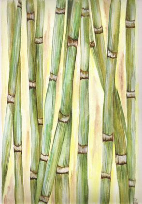 Bambus - Aquarell - 21x31cm -  40x50cm