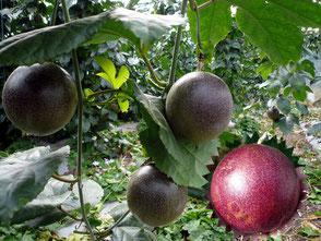 e Passion Fruits