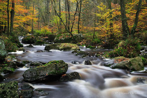 Flüsse + Bäche