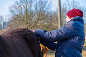 Pferdeosteopathie - manuelle Untersuchung