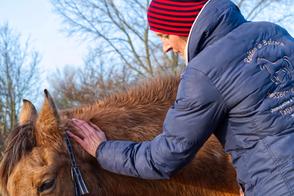 Osteopathische Behandlung am Pferd - manuelle Techniken