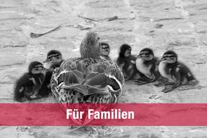 Psychotherapie und Körpertherapie für Familien in Schwerin