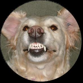 Hundeschule DreamTeam Verhaltensberatung