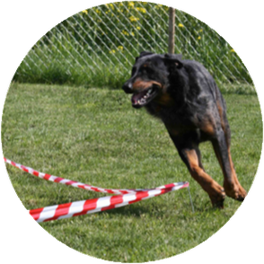 Hundeschule DreamTeam Circle Game