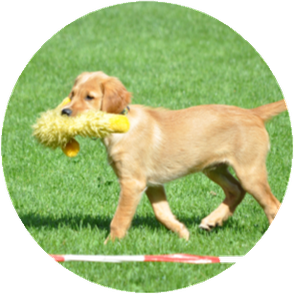 Hundeschule Dreamteam Welpenstunden Clever Forever Emotional Honey