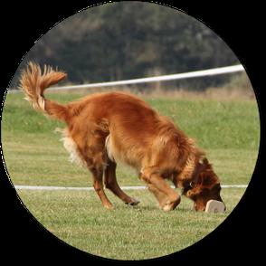 Hundeschule DreamTeam Obedience Unterordnung