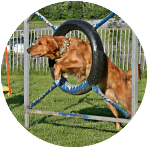 Hundeschule Dreamteam Plausch-Agility Clever Forever Emotional Honey